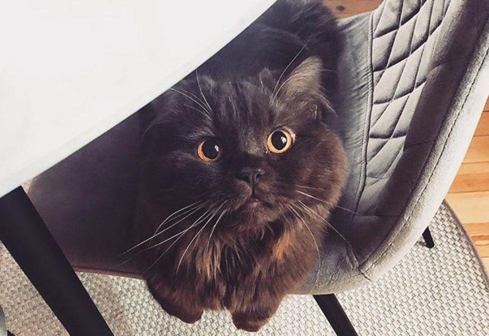 fluffy cat, cute