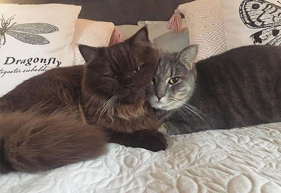 best friends, cute cats