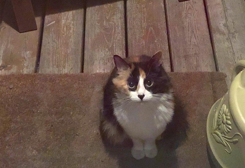 stray cat, calico kitten, doorstep