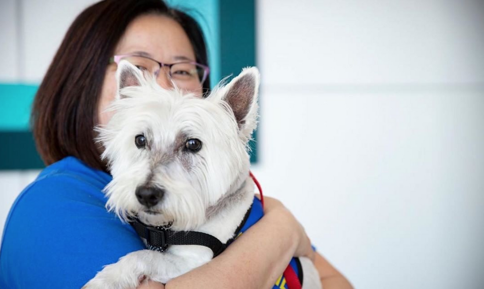 Feel A Lil' Better: Because Therapy Dogs Aren't Just Cute, They're Working