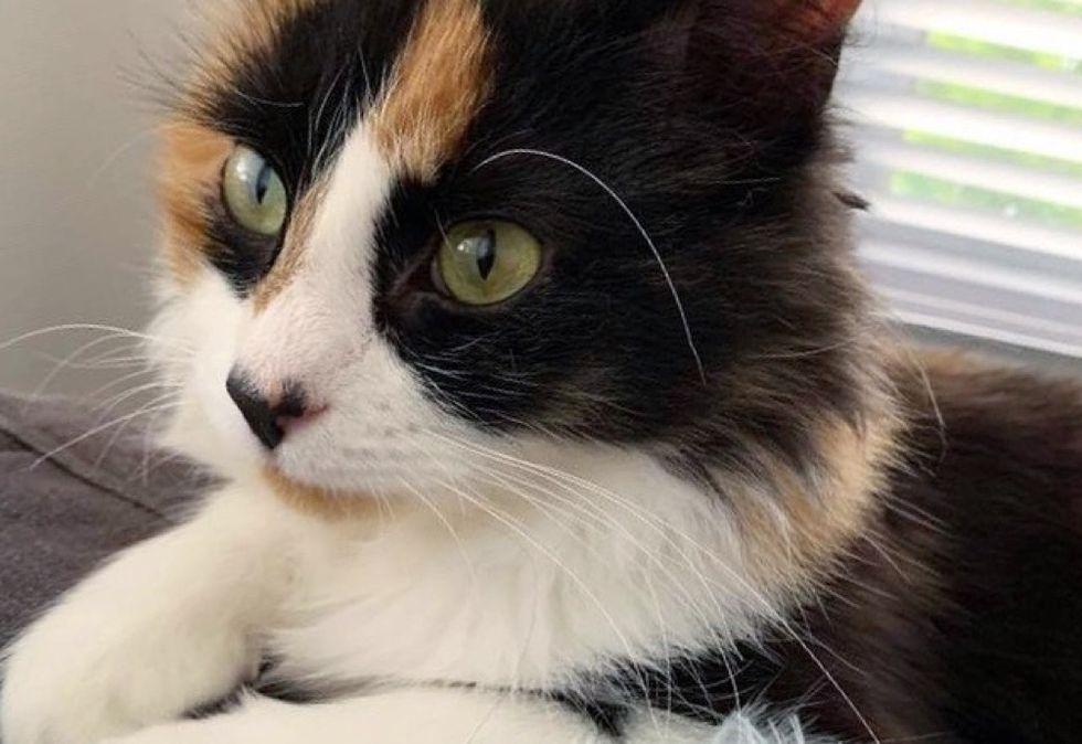 calico kitten, cute cat