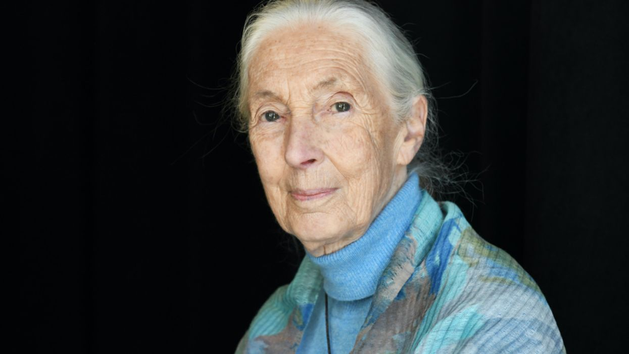 Jane Goodall on Conservation, Climate Change and COVID-19: 'If We Carry on With Business as Usual, We're Going to Destroy Ourselves'