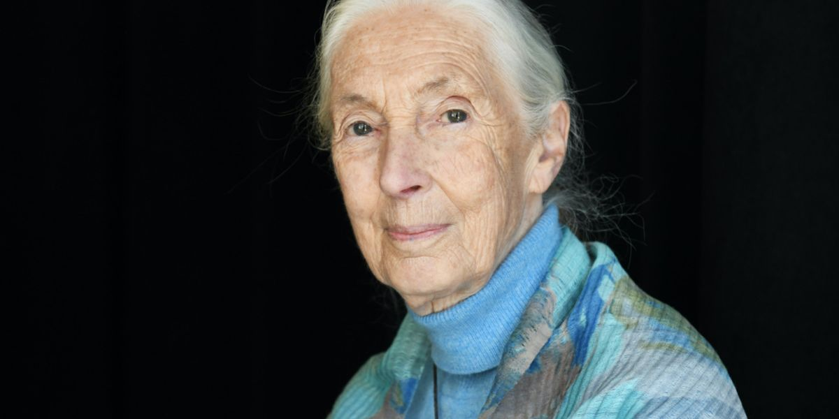 "Jane Goodall on Conservation, Climate Change and COVID-19: ""If We Carry on With Business as Usual, We're Going to Destroy Ourselves"""