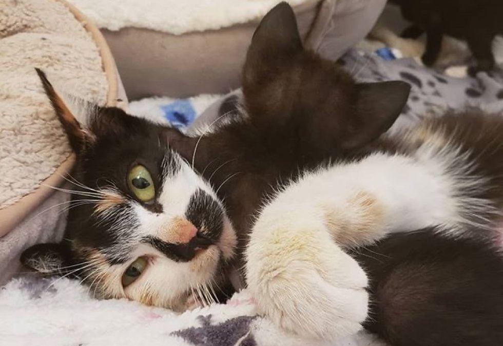 calico cat, cat mom, cuddle