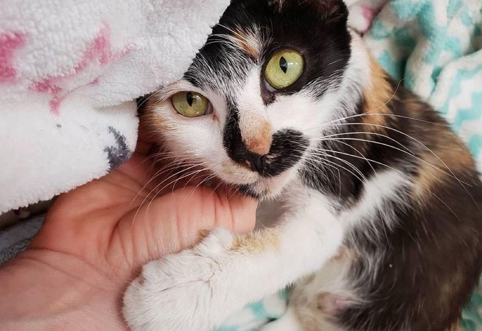 sweet cat, calico kitten
