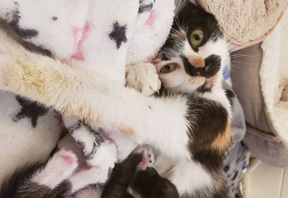 stretching, cute cat