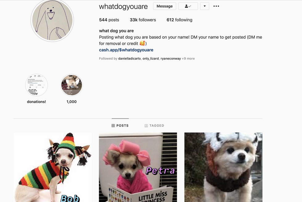 This Dog Instagram Will Make Your Day