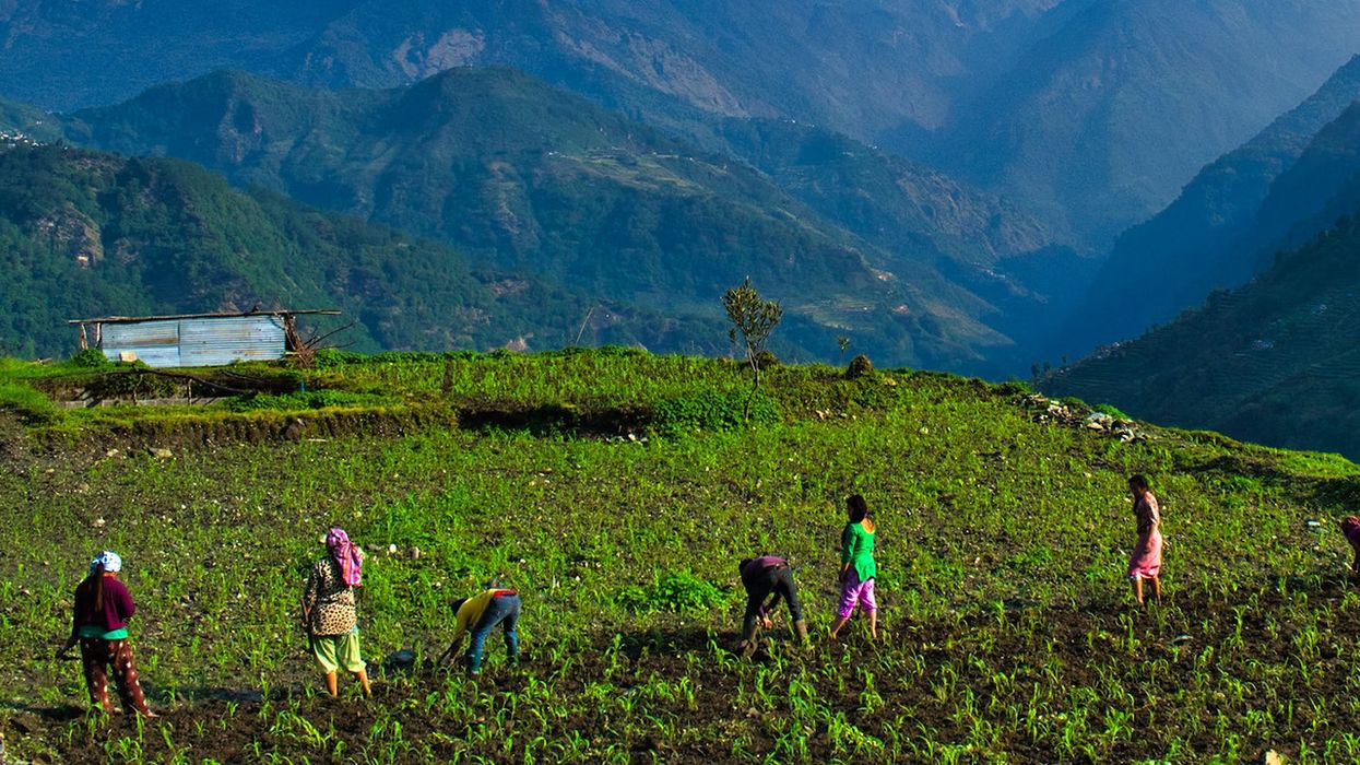COVID-19 and the Global Food Supply: Big Lessons From the World's Small Farms