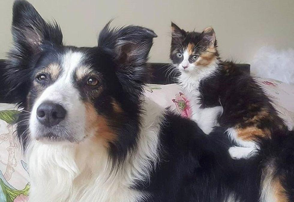 dog, cute cat, kitten