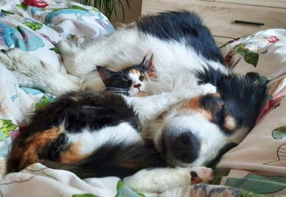 snuggles, cuddles, kitten, dog