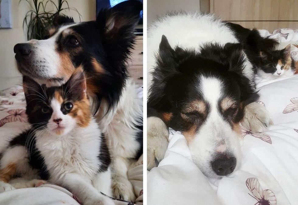 best friends, dog, cat, cute kitten