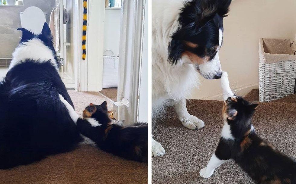 best friends, calico kitten, dog