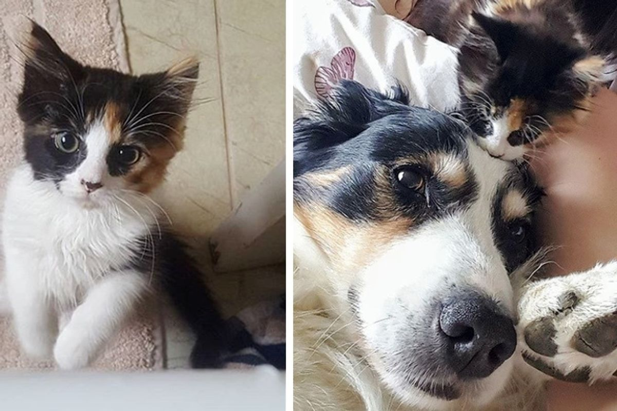 Family Dog Takes to Kitten and Decides to Care for Her as Her Own