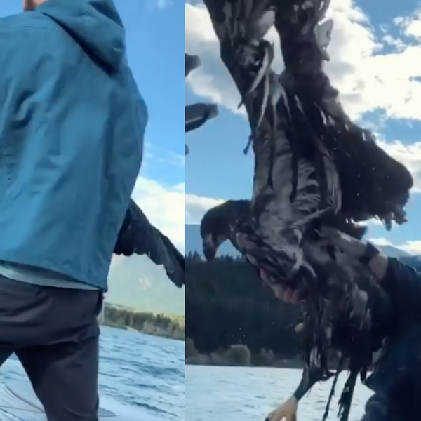 Canadian Man Saves Baby Bald Eagle From Drowning To Prove To Infant Son That He's 'Cool'