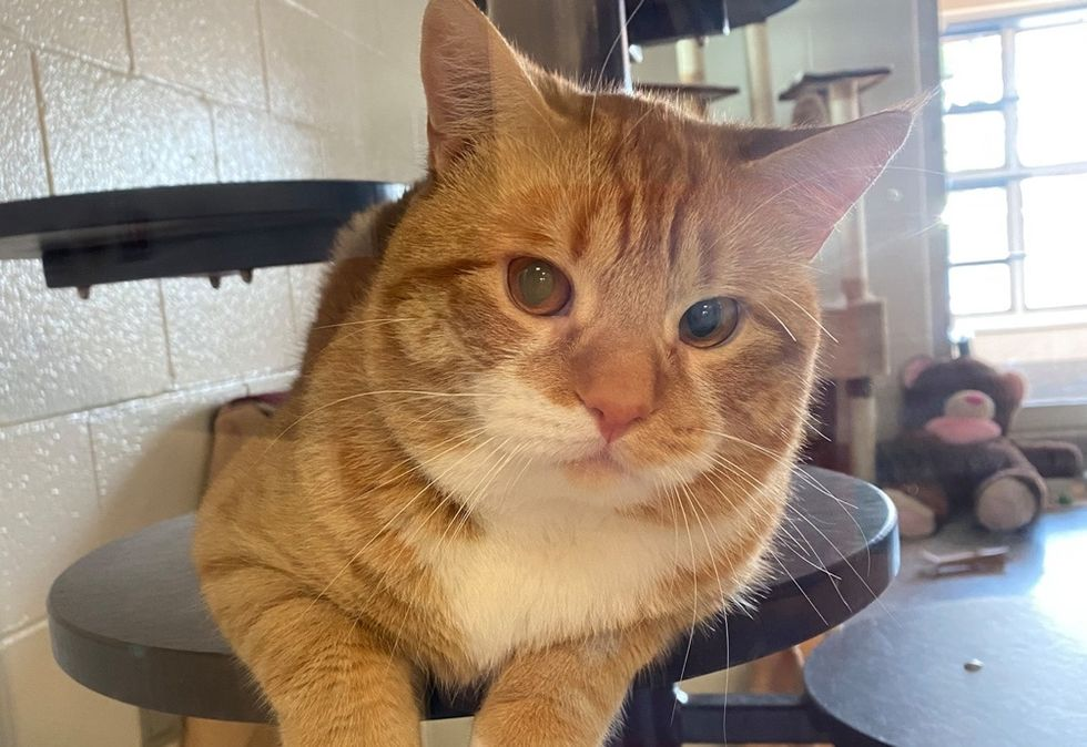 handsome cat, ginger, cute