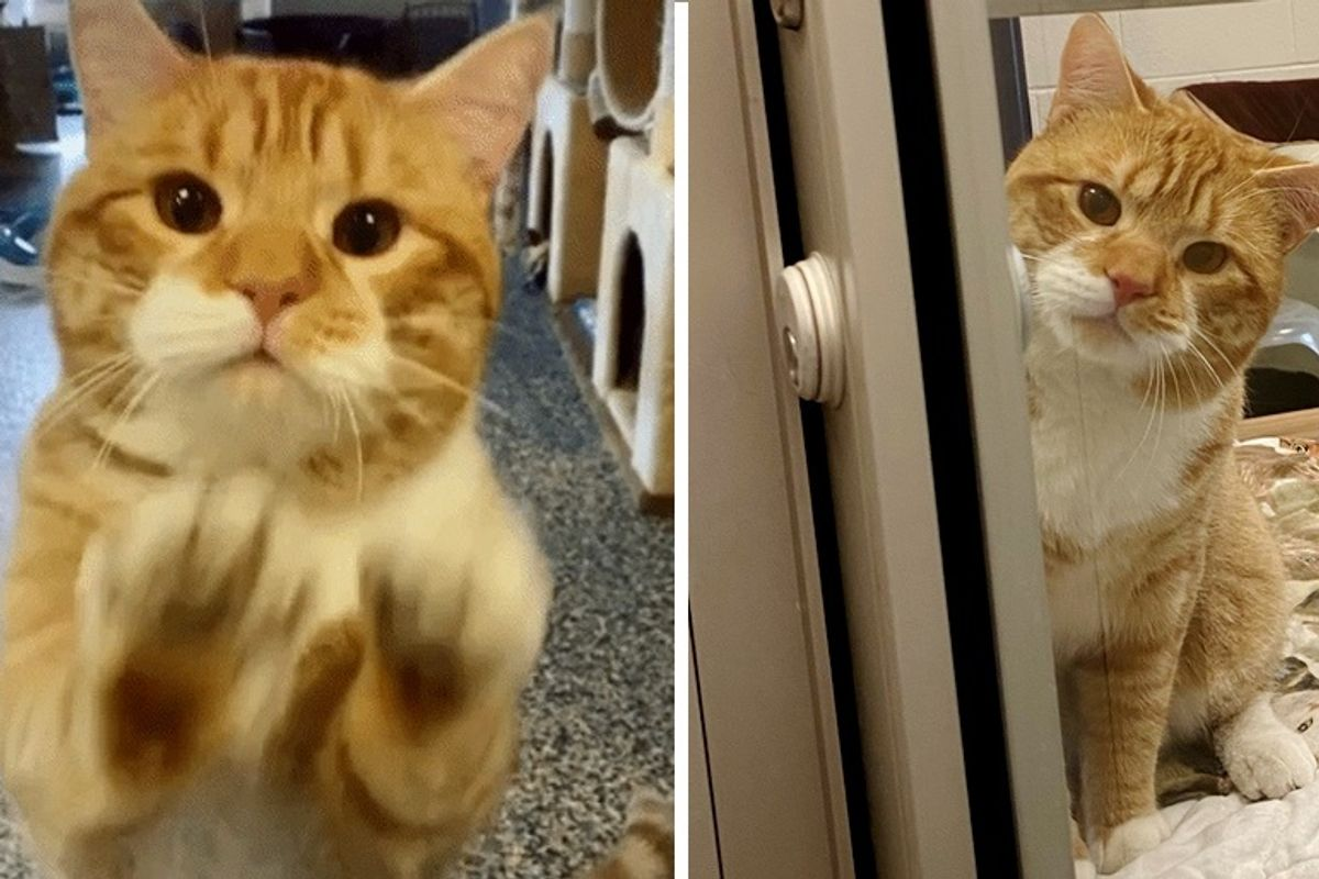 Cat Waves at Visitors at Shelter and Hopes Someone Can Take Him Home