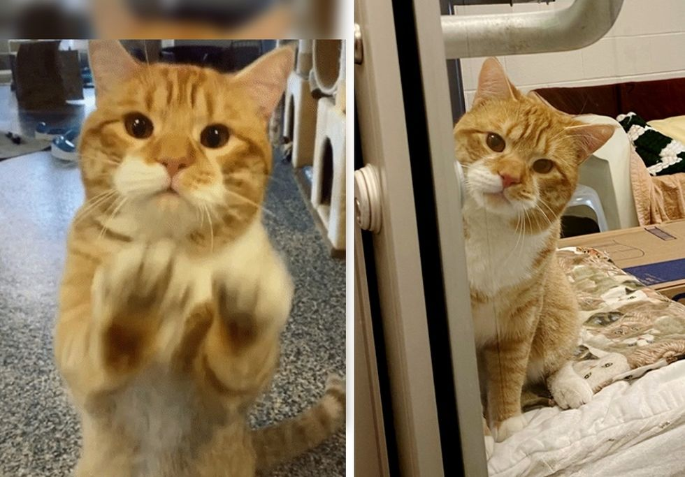 ginger cat, shelter, paws