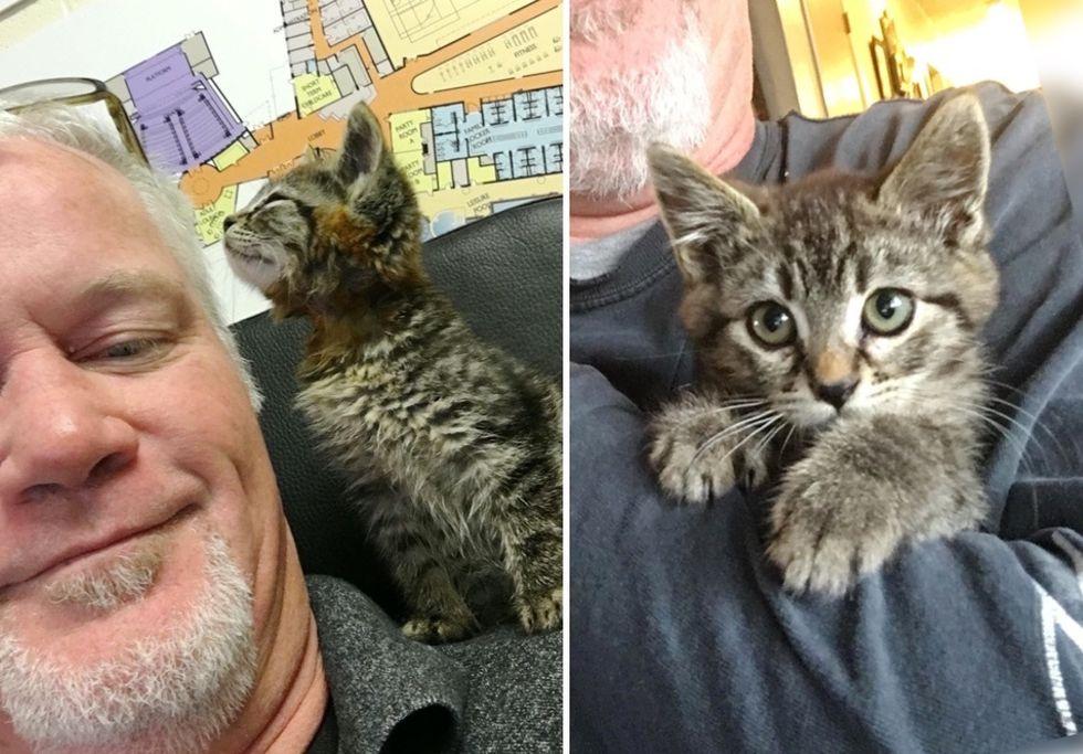 cute kitten, tabby, sticky the cat