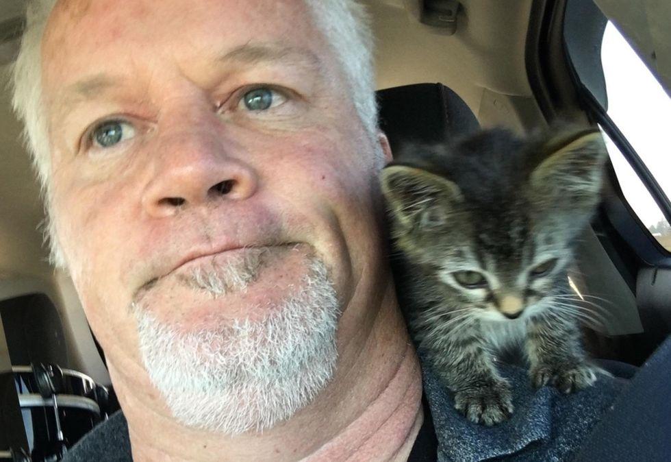 shoulder kitten, sticky the cat