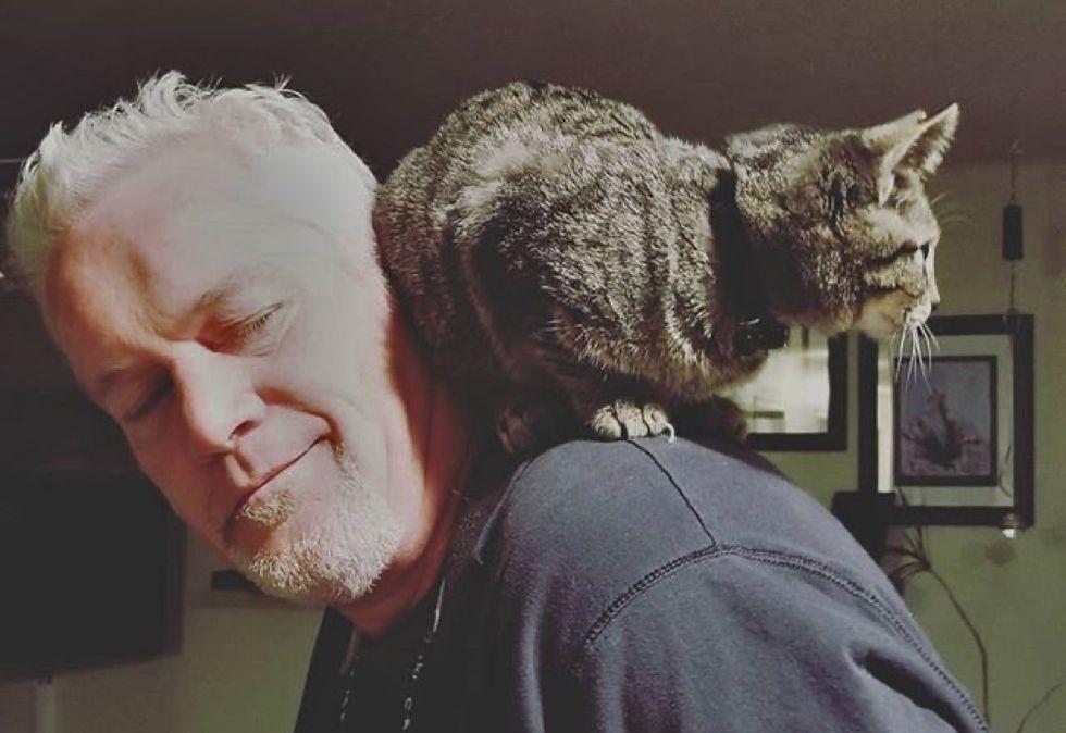 shoulder cat, tabby
