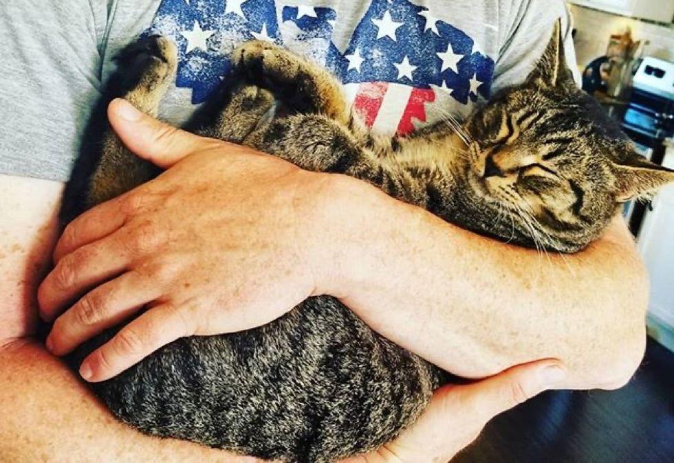 tabby, cat, cuddles