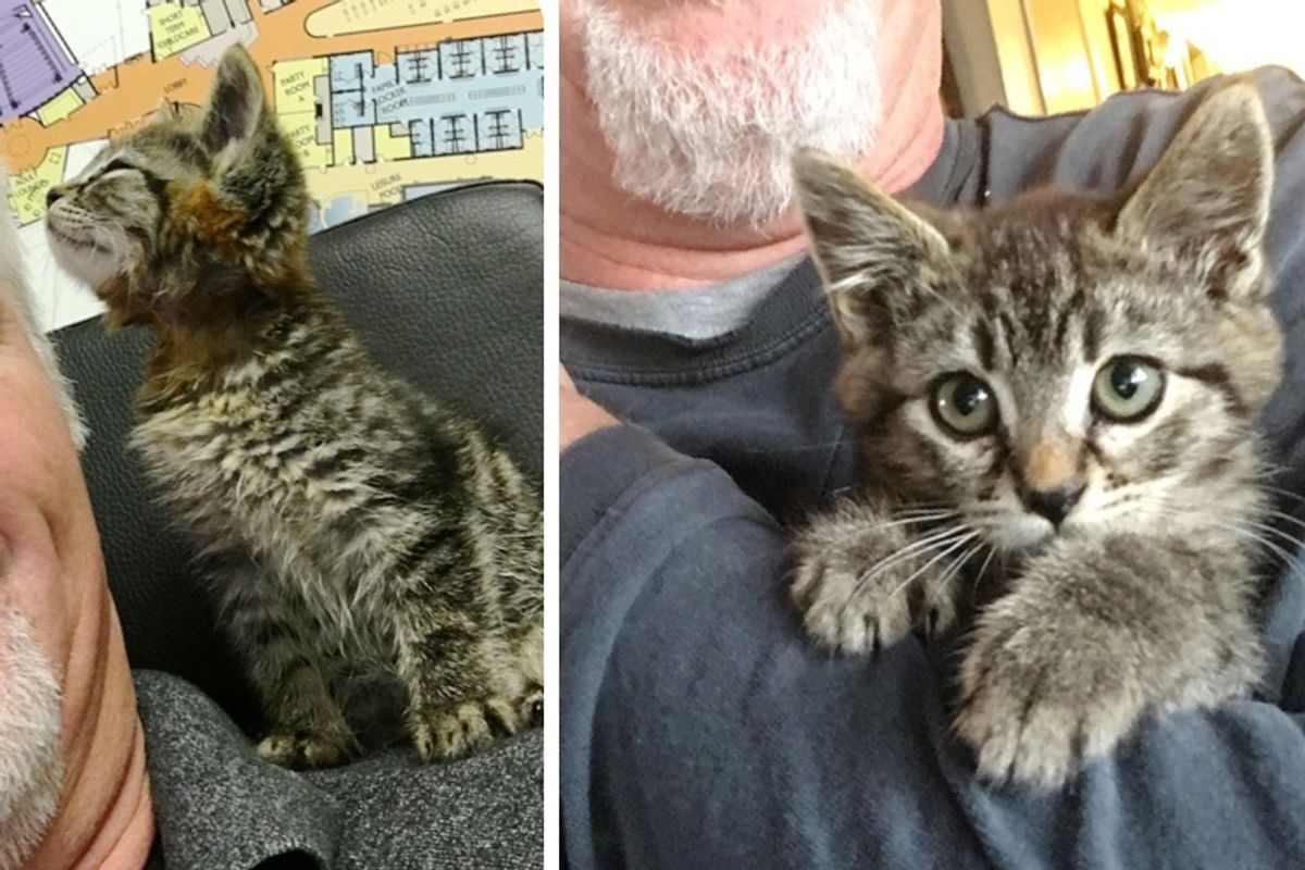 Kitten Cuddled Man Who Rescued Him from Road, and Blossomed into Happiest Shoulder Cat