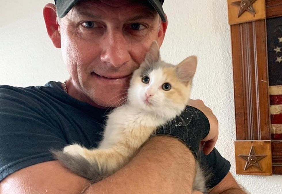 calico kitten, cute, cuddle
