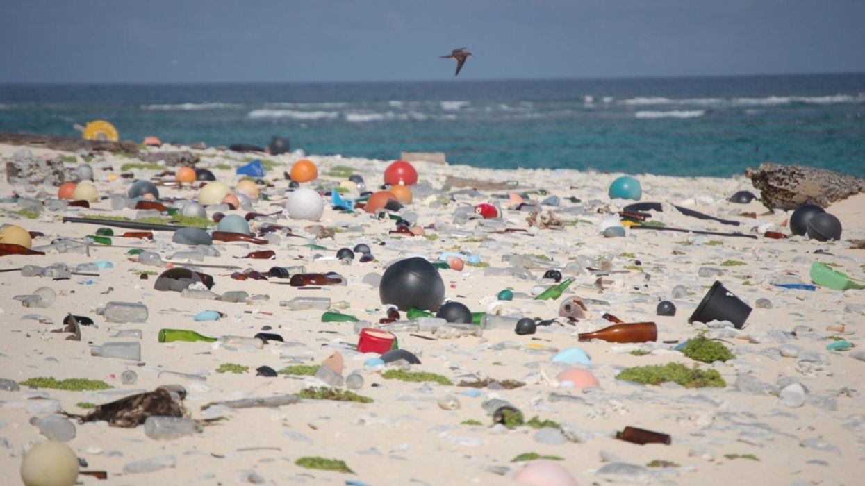 Microplastics Are Increasing in Our Lives, New Research Finds