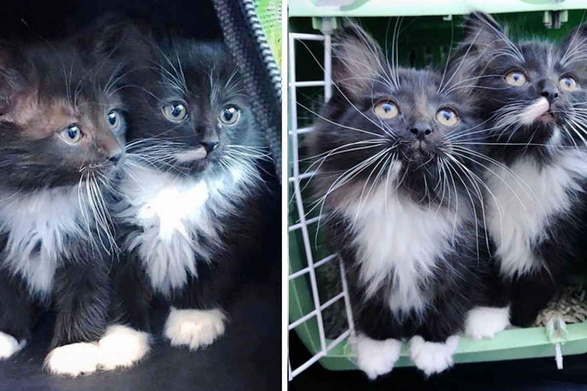 Twin Kittens Won't Leave Each Other's Side and Are Looking for Home Together