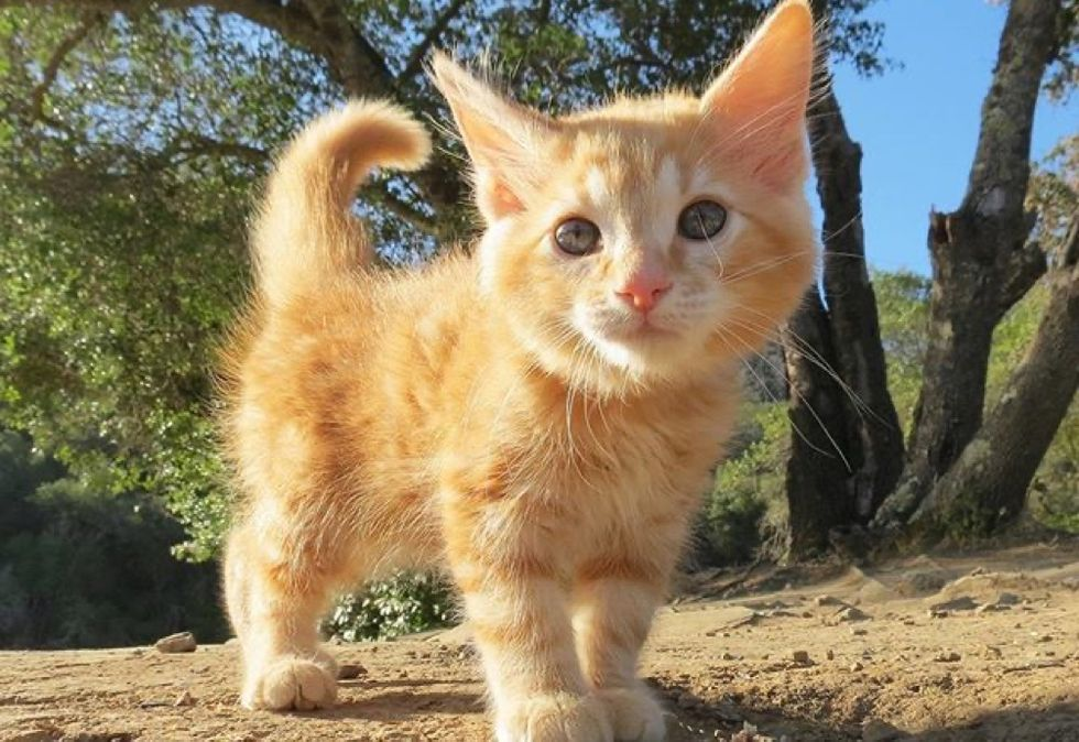 adorable cat, ginger kitten, cute