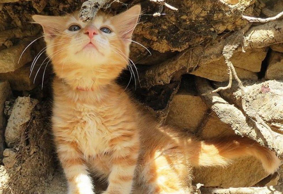 adventurous cat, ginger kitten, cute