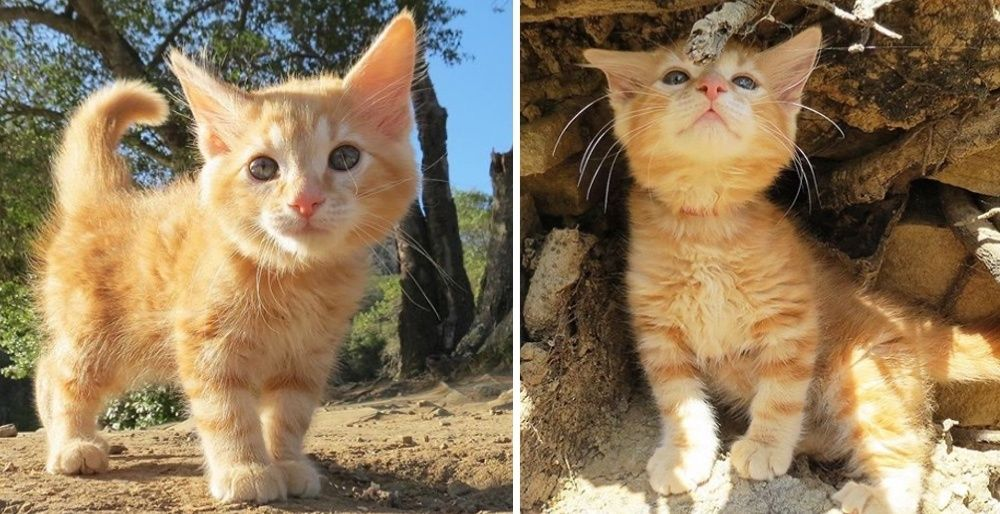 Stray Kitten Found in Parking Lot Insists on Being with Family that Took Him in