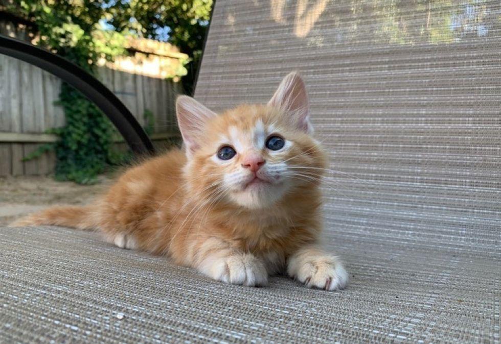 ginger cat, cute kitten