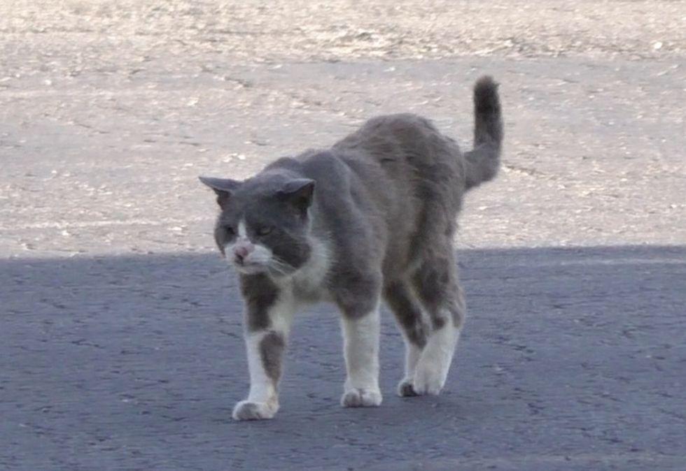 stray cat, street
