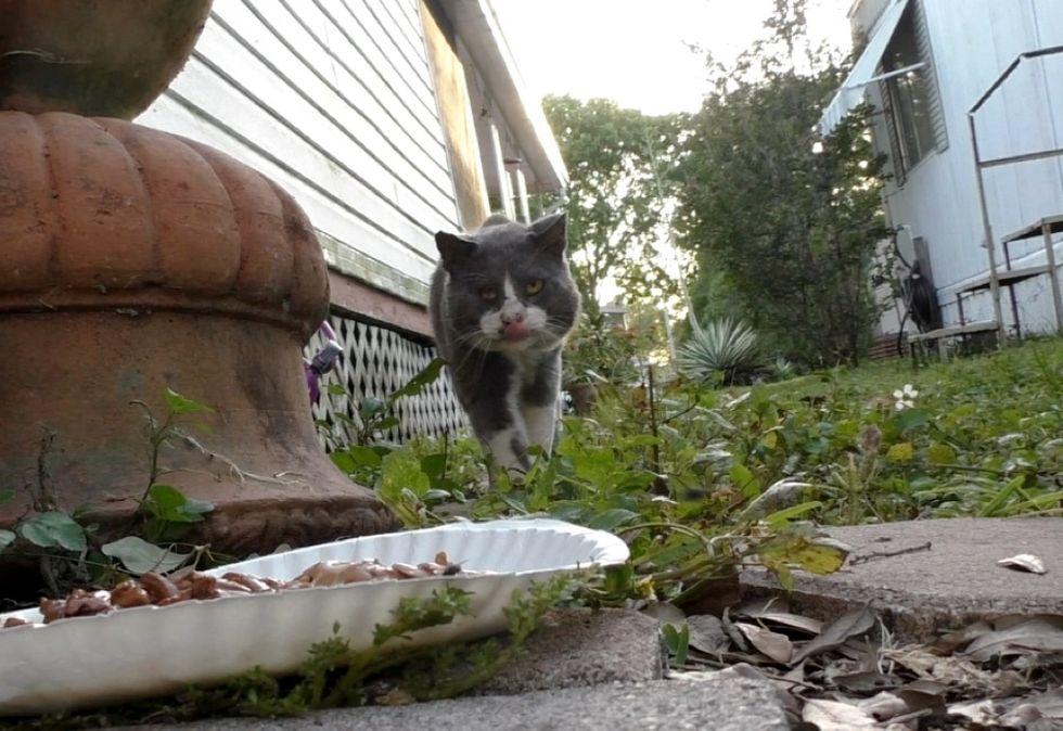 street cat, stray cat