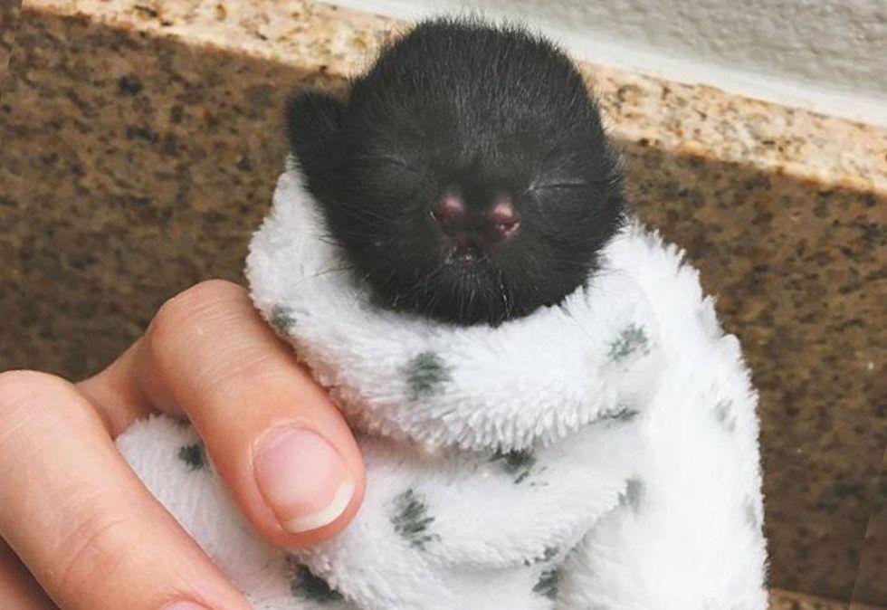 cute kitten, purrito