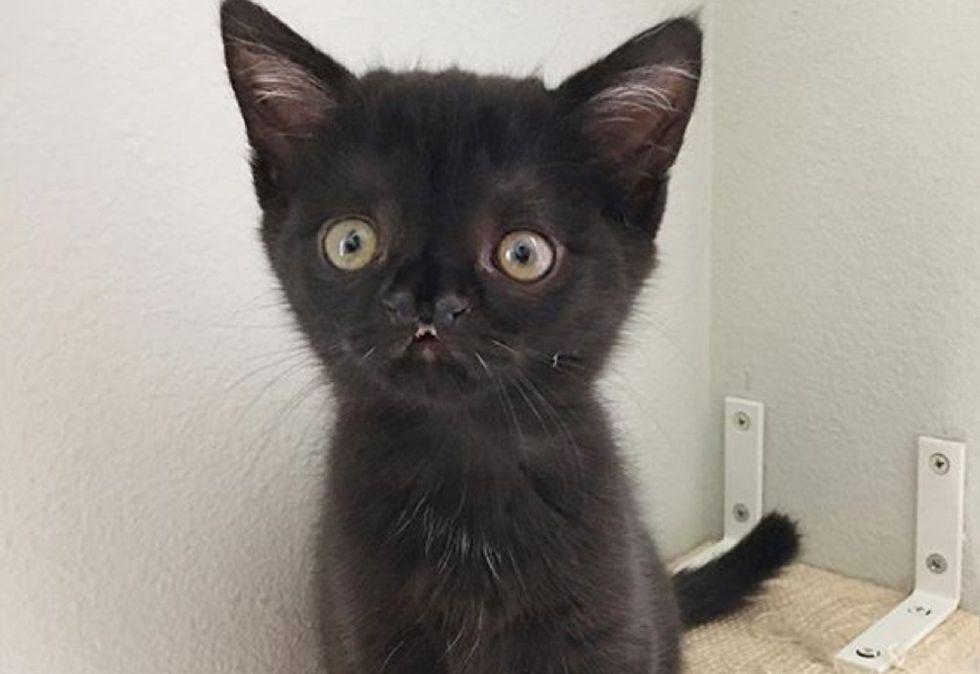 overbite, kitten, cute