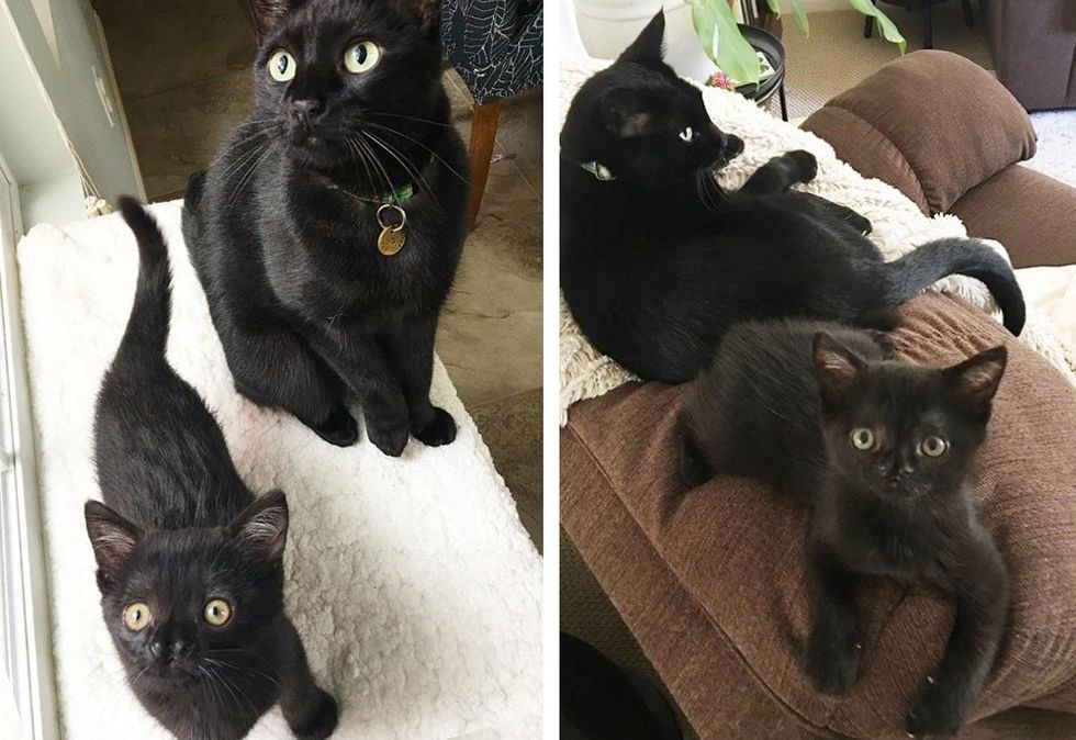 cute, cat, kitten, panther kitty