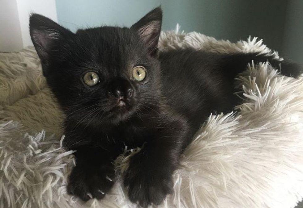 cute, kitten, nose