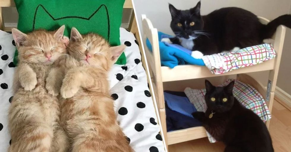 IKEA Is Selling Beds for Children's Toys but People Are Using Them for Their Cats