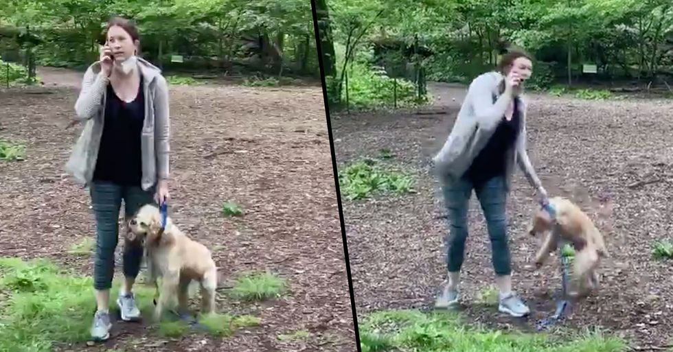 'Karen' Who Called the Cops on a Black Man Who Asked Her to Leash Her Dog Returns Dog to Shelter
