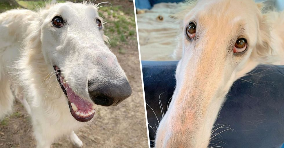 Dog With Incredible 12-Inch Nose Becomes an Internet Sensation