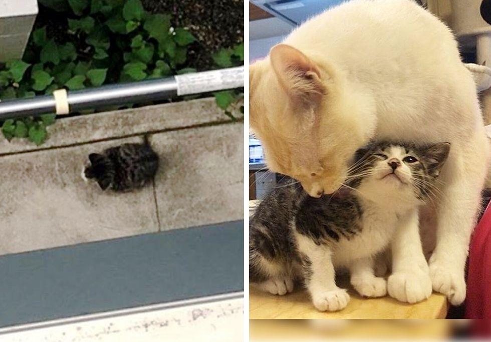 stray kitten, cat, cute kitten