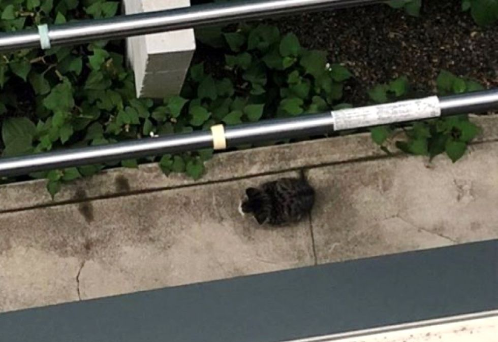 stray kitten, street cat