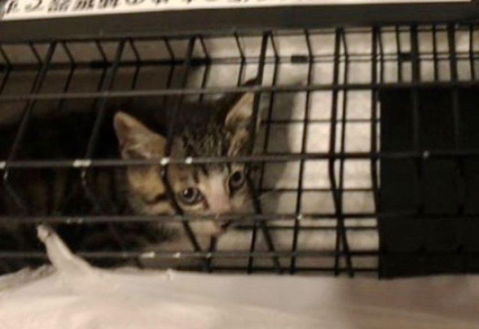 rescue kitten, stray kitten
