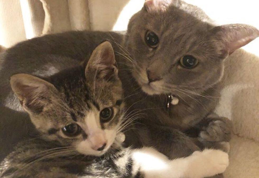 best friends, cute, kitten, cat