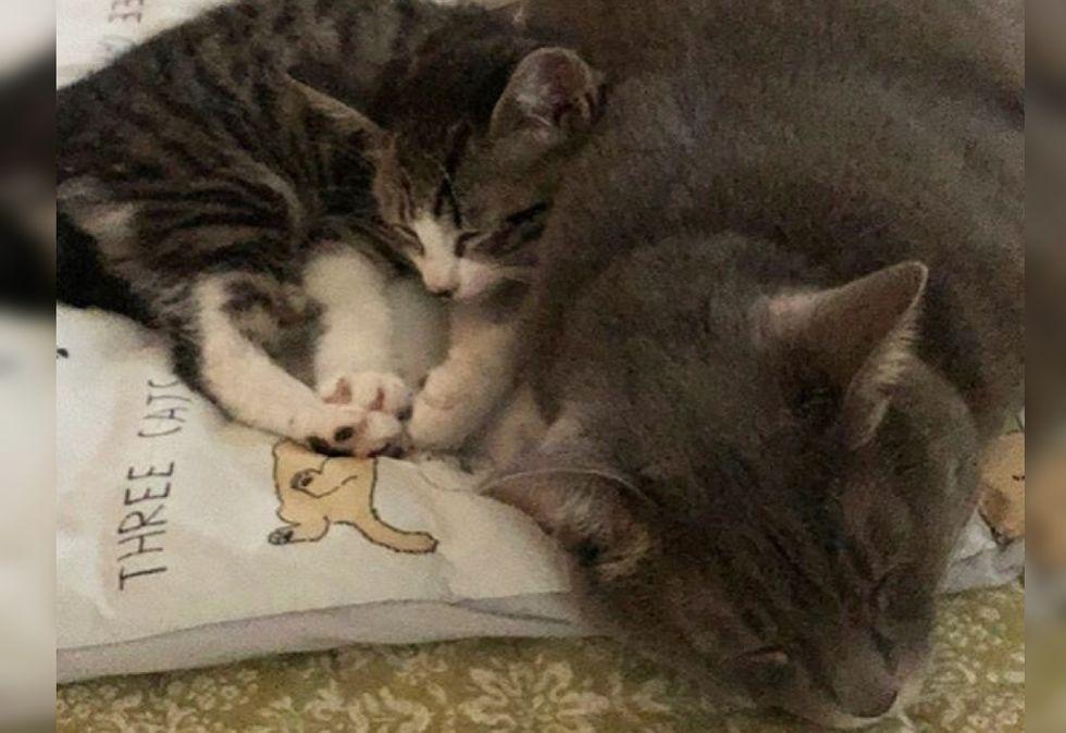 cuddle, kitten, cat