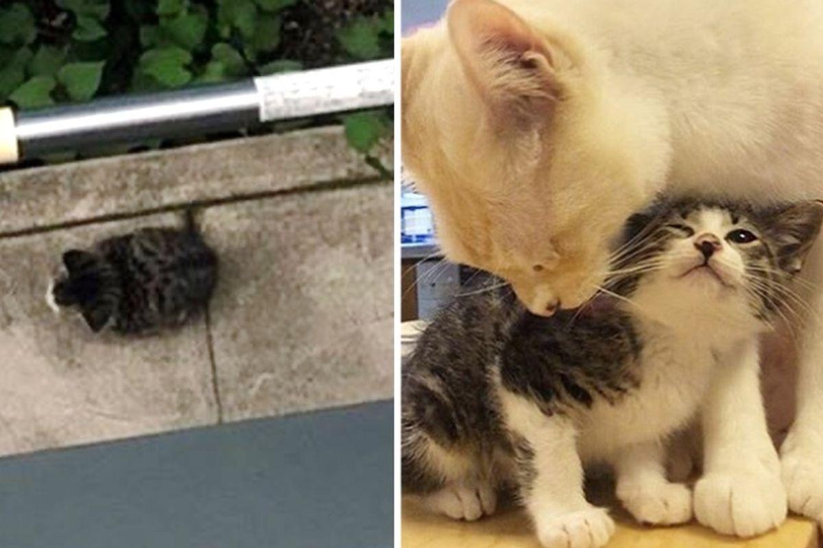 Stray Kitten Found Sitting Alone in Yard Gets Help to Thrive