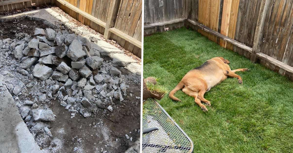 Rescue Dog Had Never Had His Own Yard Before so His Mom Built Him One