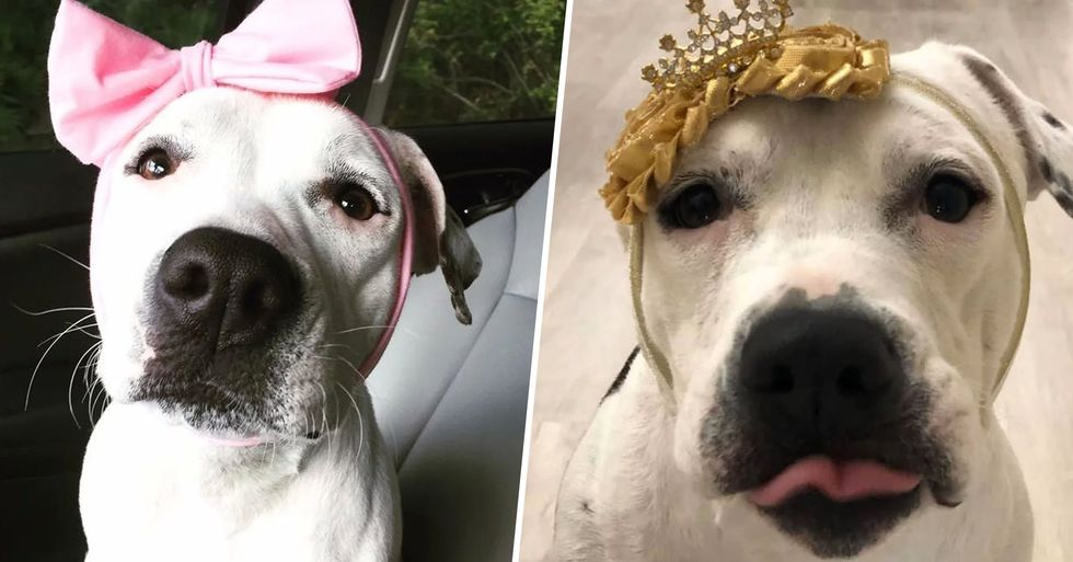 Rescued Bait Dog Turned Therapy Dog Is 'The New Disney Princess'